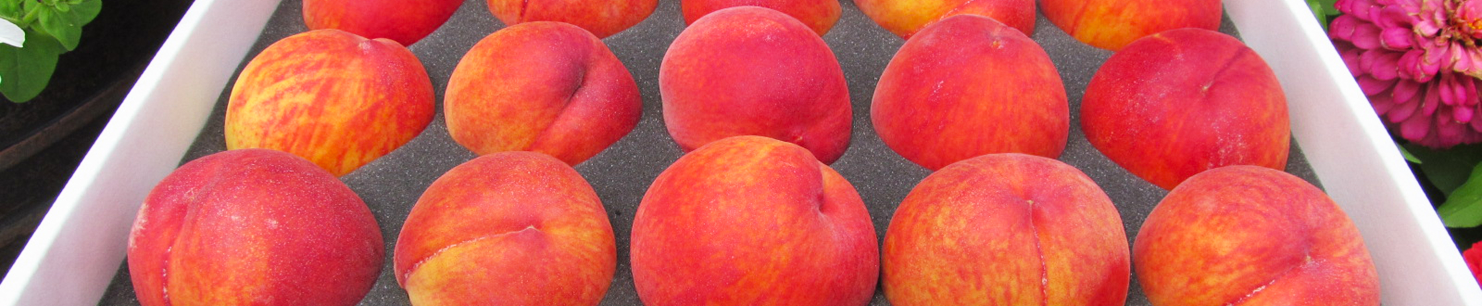 we ship fresh peaches nationwide